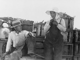 Japanese-Americans Farm Workers in California Photo by Dorothea Lange  1937