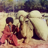 Central Asian Camel Driver Poses with a Camel Loaded with Packs Ca 1910