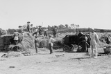 Harvesting Grain on a Jewish Kibbutz  in Palestine  Ca 1920-39