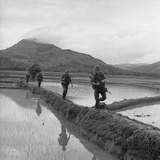 US Marines Move Along Rice Paddy Dikes in Pursuit of Viet Cong  Dec 1965