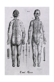 Human Figure with Acupuncture Points and Meridians Identified  1825