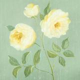 Abundant Rose I