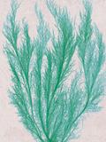 Emerald Sea IV