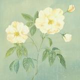 Abundant Rose II