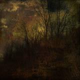 Dark Forest 4