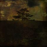 Dark Forest 3