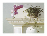 Mantelpiece Orchid