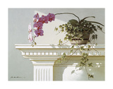 Mantelpiece Orchid