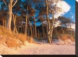 Pine Trees On Aquitaine Coast
