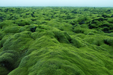 Field of Moss