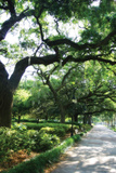 Savannah Sidewalk II