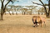 Bonding Lions Walk