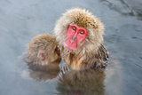 Mother Snow Monkey