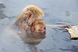 Mother Snow Monkey Embracing Child