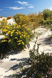 Assateague Beach 5