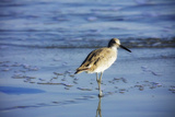 Sandpiper in the Surf II
