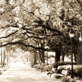 Savannah Sepia Sq I
