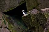 Puffin Cave