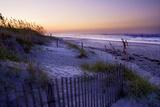 Lavender Beach II