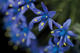 Purple Bloom Detail
