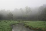Creek in Fog I