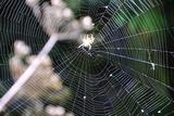 Spiderweb II