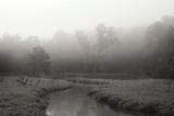 Creek in Fog I - BW
