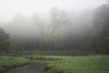 Creek in Fog II