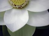 Macro Lotus