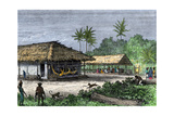 Native Houses in a Jungle of Brazil  1800s