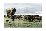 Prairie Schooner Pulled by Oxen on the Pampas of Argentina  1800s