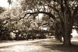 Charleston Oaks 9 Sepia