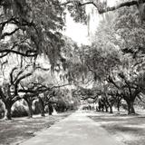 Charleston Oaks Sq X