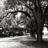 Charleston Oaks Sq IX