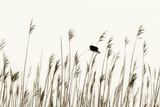Bird in the Grass 1