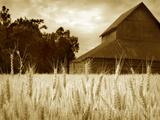 Harvest Time III