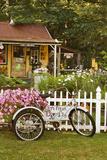 Vintage Bicycle III