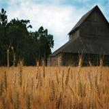 Harvest Time IV