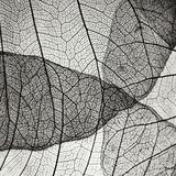 Leaf Designs IV BW