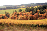 Fall in Wine Country I