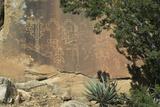 Native American Petroglyphs in Lobo Canyon  Cebolla Wilderness  New Mexico