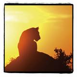 Radiant Africa 4