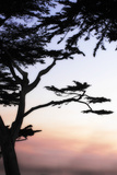 Cypress Silhouette 4