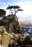 Lone Cypress 1