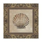 Shell Elegance II