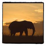Radiant Africa 2
