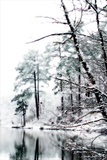 Shelly Lake in Winter I