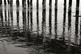 Pier Pilings 15