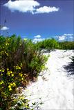 A Sandy Pathway I