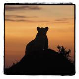 Radiant Africa 3